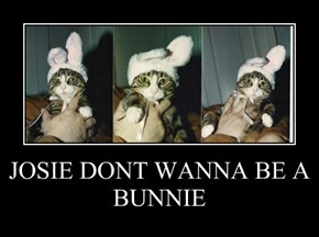 JOSIE DONT WANNA BE A BUNNIE
