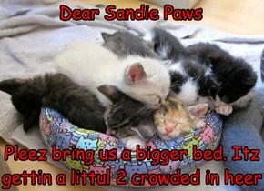 Dear Sandie Paws