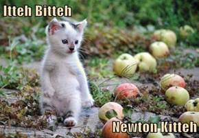 Itteh Bitteh  Newton Kitteh