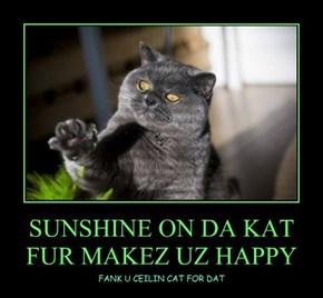 SUNSHINE ON DA KAT FUR MAKEZ UZ HAPPY