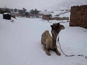 Did Not See That Coming of the Day: Winter Storm Blankets the Middle East with Snow