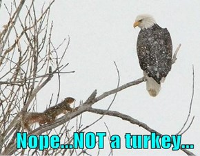 Nope...NOT a turkey...
