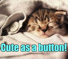 Apparently, buttons are cute.