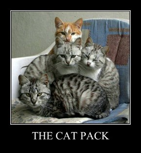 THE CAT PACK