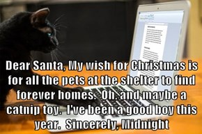 Dear Santa, My wish for Christmas is for all the pets at the shelter to find forever homes.  Oh, and maybe a catnip toy.  I've been a good boy this year.  Sincerely, Midnight