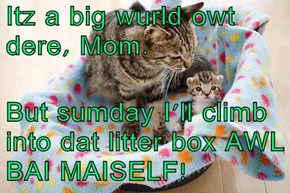 Itz a big wurld owt dere, Mom.  But sumday I'll climb into dat litter box AWL BAI MAISELF!