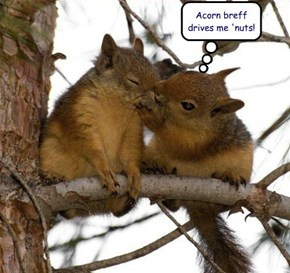 If Loving Nut Acorns is Wrong, I Don't Wanna Be Right!