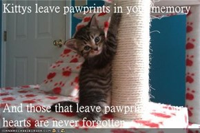 Kittys leave pawprints in your memory   And those that leave pawprints in our hearts are never forgotten.
