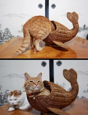 Ais a Killr Whale...Feed Meh Fishes!
