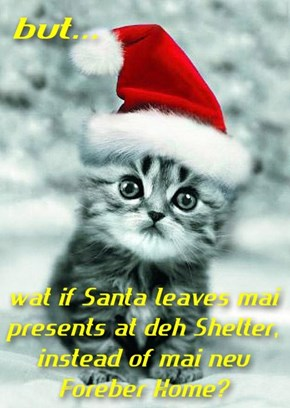 Don't worry kitteh, Santa knows where to find yu.