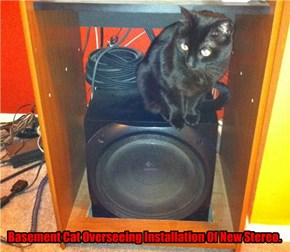 Basement Cat Overseeing Installation Of New Stereo.