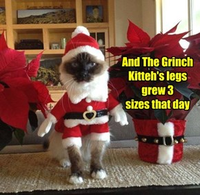 And The Grinch Kitteh's legs grew 3 sizes that day
