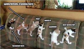 spiderkittehs training here