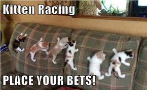 Kitten Racing  PLACE YOUR BETS!