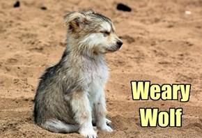 Weary Wolf