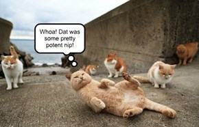 Whoa! Dat was some pretty potent nip!