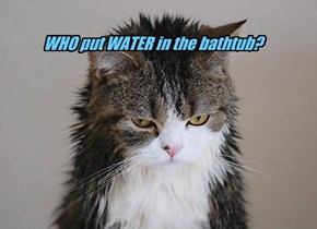 WHO put WATER in the bathtub?