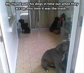All Three Were in the Dog House