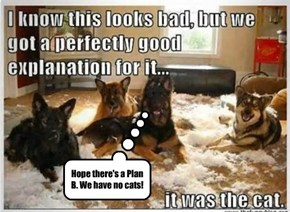 Hope there's a Plan B. We have no cats!