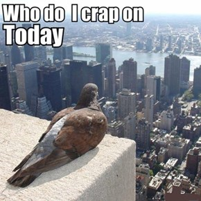 This is What Birds Think About Every Day