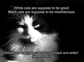 White cats are suppose to be good. Black cats are suppose to be mischievious.