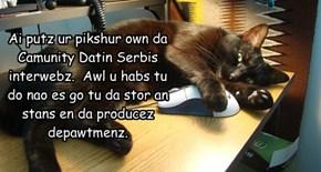 Ai putz ur pikshur own da Camunity Datin Serbis interwebz.  Awl u habs tu do nao es go tu da stor an stans en da producez depawtmenz.