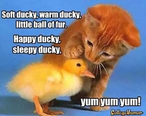 Soft ducky, warm ducky, little ball of fur.