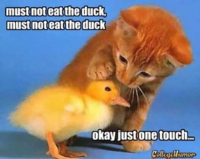 must not eat the duck, must not eat the duck