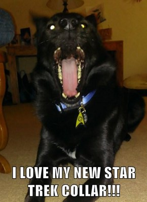 I LOVE MY NEW STAR TREK COLLAR!!!