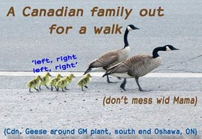 Taking the family out for a walk