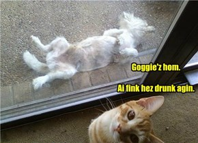 Goggie'z hom.   Ai fink hez drunk agin.