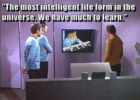 """The most intelligent life form in the universe. We have much to learn."""