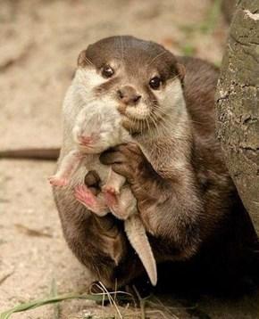 A Proud Otter Mama