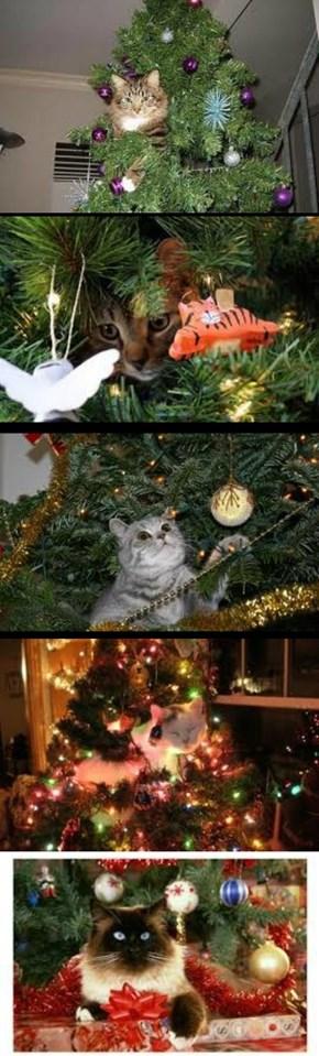 Merry Catmas 2013