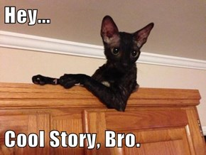 Hey...  Cool Story, Bro.