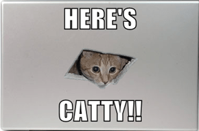 HERE'S  CATTY!!