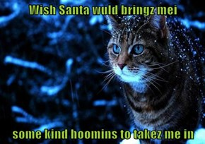 Wish Santa wuld bringz mei  some kind hoomins to takez me in