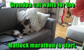Grandpa cat waits for the  Matlock marathon to start.