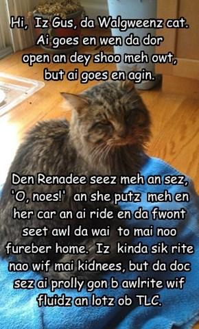Hi,  Iz Gus, da Walgweenz cat.    Ai goes en wen da dor  open an dey shoo meh owt,  but ai goes en agin.        Den Renadee seez meh an sez, 'O, noes!'  an she putz  meh en her car an ai ride en da fwont seet awl da wai  to mai noo fureber home.  Iz  kind