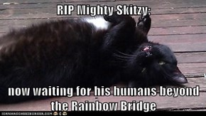 RIP Mighty Skitzy;   now waiting for his humans beyond the Rainbow Bridge