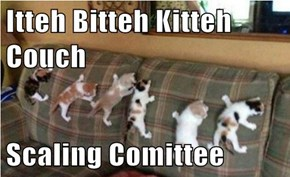 Itteh Bitteh Kitteh Couch  Scaling Comittee
