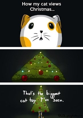 What Happens to a Lot of Cats This Time of Year