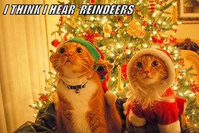 I THINK I HEAR  REINDEERS