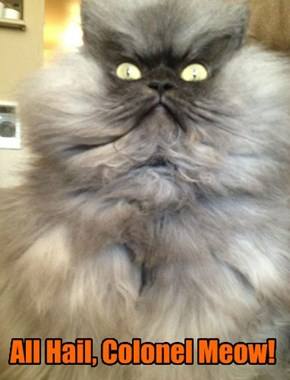 All Hail, Colonel Meow!