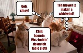 Hoomin's lil helpers