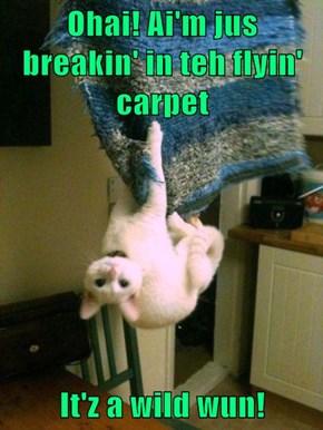 Ohai! Ai'm jus breakin' in teh flyin' carpet  It'z a wild wun!