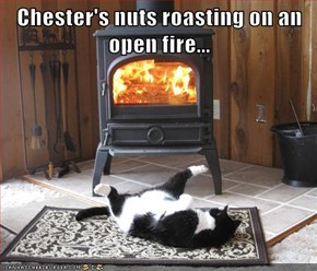 Chester Knows How to Keep Warm in the Winter