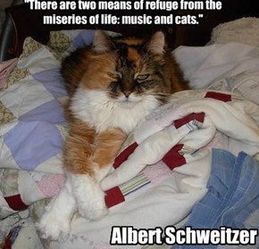 """There are two means of refuge from the miseries of life: music and cats."""