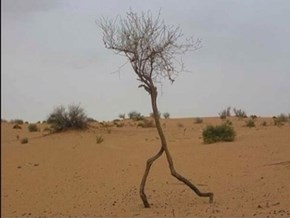 This Ent Got All Turned Around On The Way To Isengard