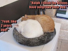 """""""Ralph, I think the kittens                                                                      have outgrown their bed."""" """"Yeah, like                                                                                        2 years"""